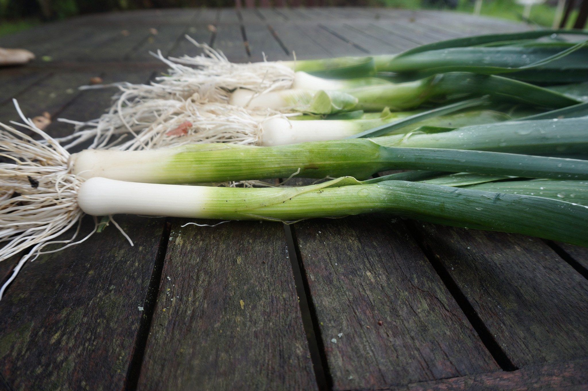 The Humble Leek: The Link Between Nutrition and Flavor