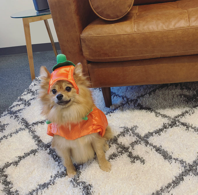 👻 Scary Cute Halloween Pet Costumes!