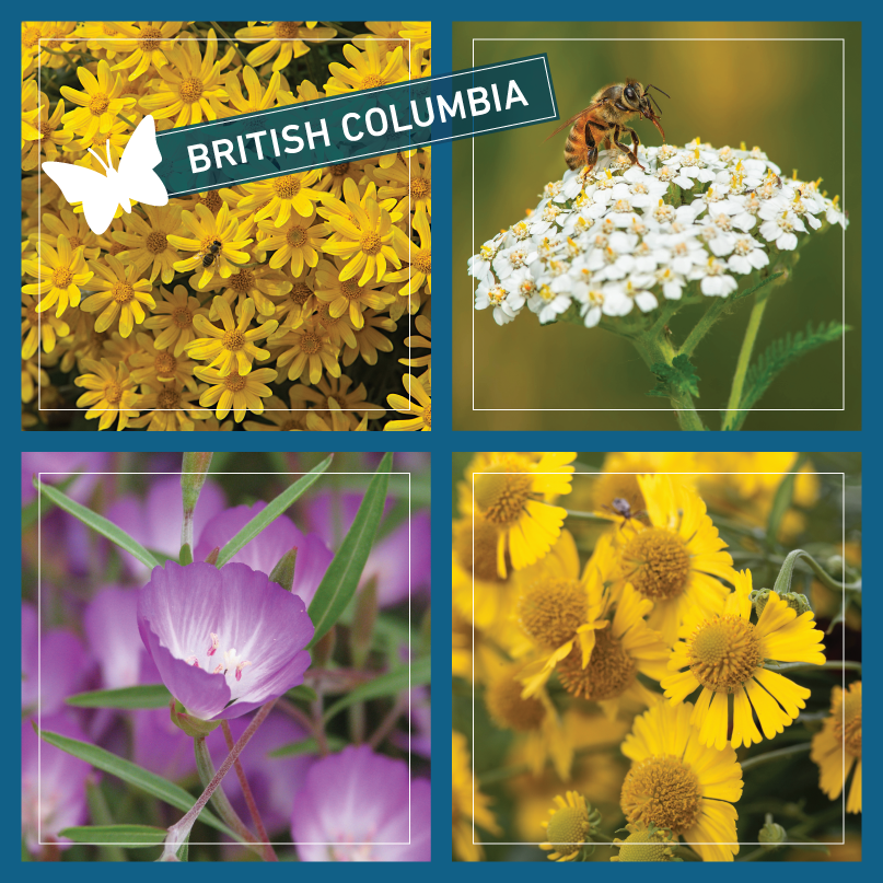 British Columbia Butterflyway seeds