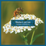 Load image into Gallery viewer, British Columbia Butterflyway seeds