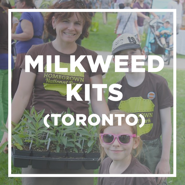 Milkweed plant + seed kits (Toronto pick-up only)