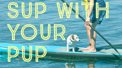 sup padding with your pet dog