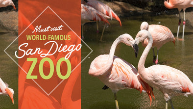 Must Visit: World-Famous San Diego Zoo