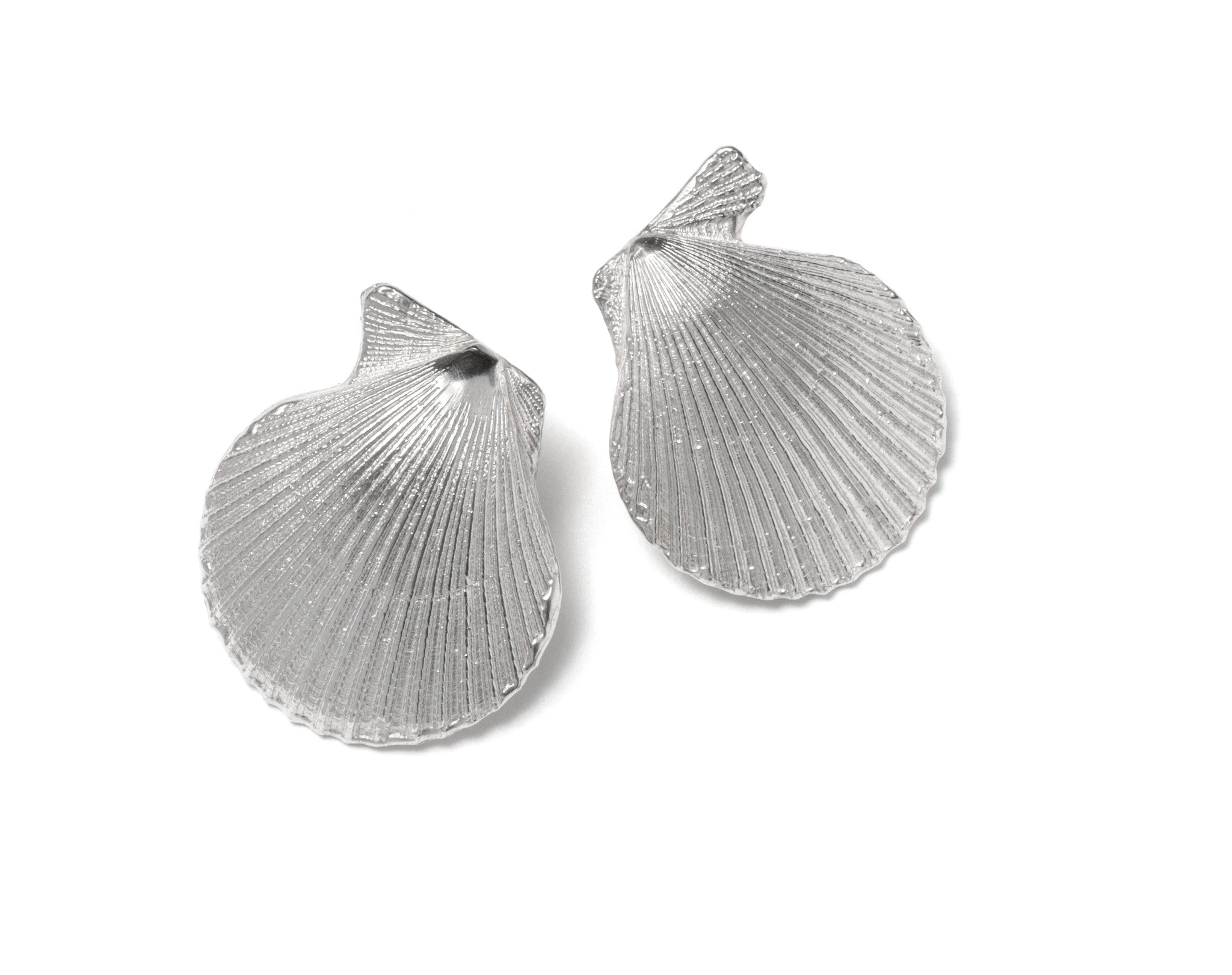 Pecten Nobilis Shell Earrings