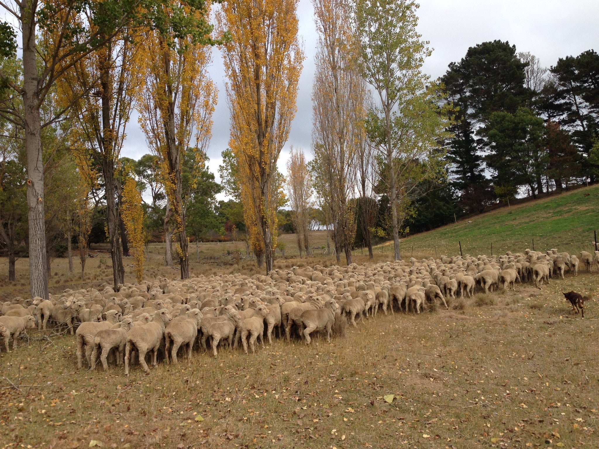 Visiting Mill Post: 14 thoughts & learnings from a sheep station