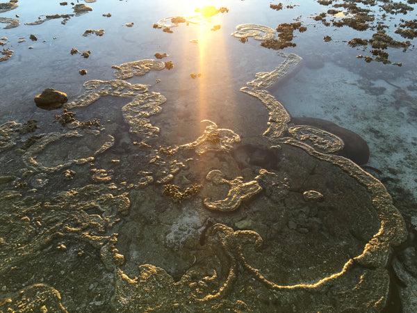 Beautiful coral formations break the surface of the water at low tide