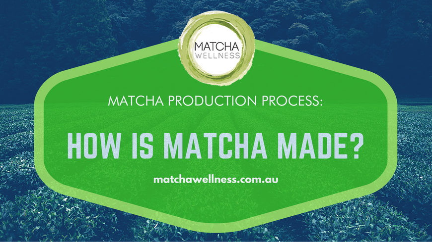 Matcha Production Process – How matcha is made
