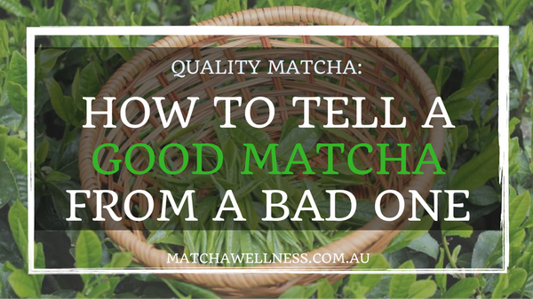 Quality Matcha – How to tell a good matcha from a bad one