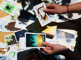 WHOLESALE Wayhome Tarot