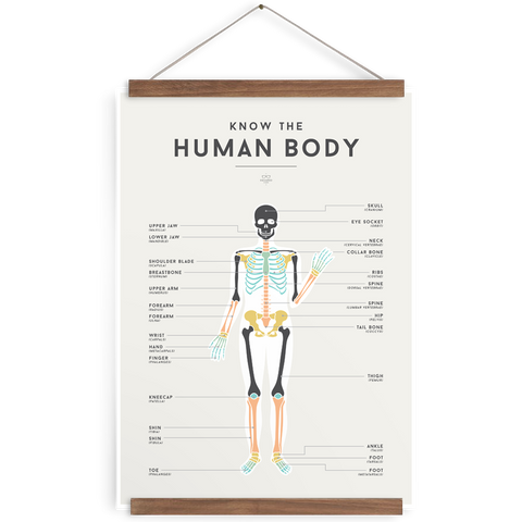 The Human Body poster - Little Me Little You