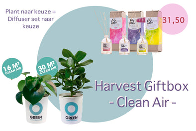Harvest Gift Box • Clean Air