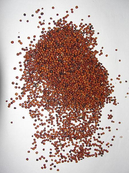 Unbelievable Ragi Benefits for Your Skin Whitening and Hair