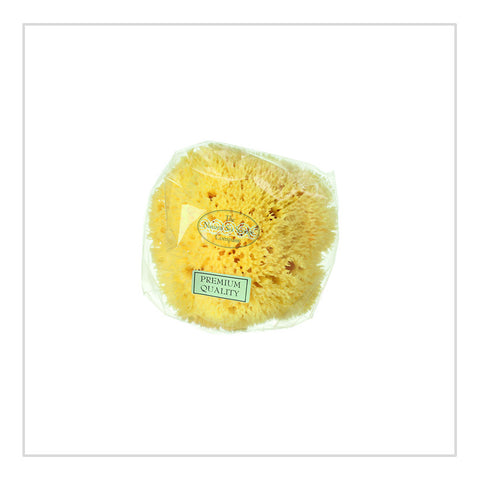 Honeycomb Sea Sponge - Hydrea London