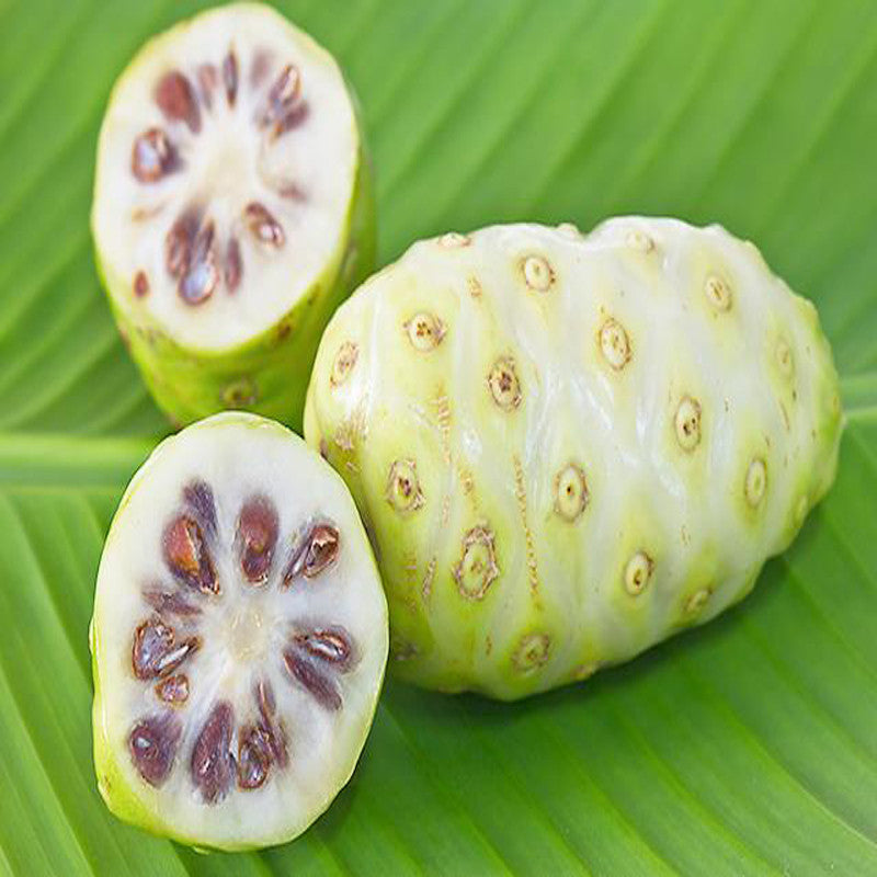Noni/cheese fruit - Fruit Plants & Tree