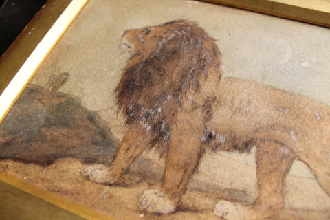 Early 20th c watercolour study of a lion
