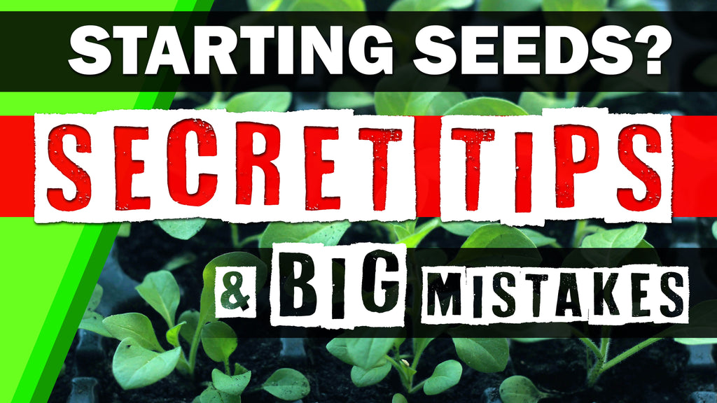 Seed Starting 101: Biggest Mistakes & Secret Tips