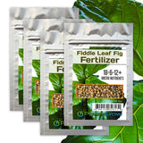 Fiddle Fig Fertilizer 18-6-12+ Micro Nutrients (8 Month Slow Release)