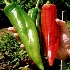 NuMex Big Jim Pepper Seeds (10 seeds)