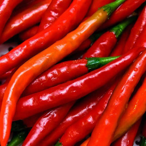 Cayenne Red Long Slim Chili Pepper (100 seeds)