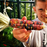 Glass Gem Corn (50 seeds)