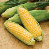Mini Mirai 003 Sweet Corn Seeds - 100 per pack
