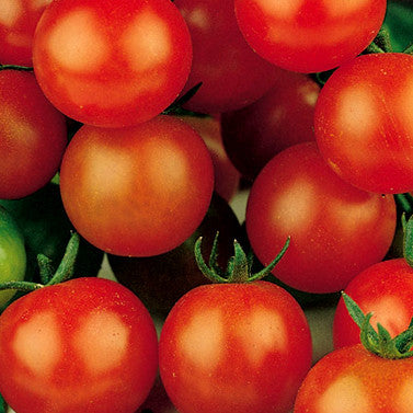 Sugar Sweetie Cherry Tomato Seeds (25 seeds)