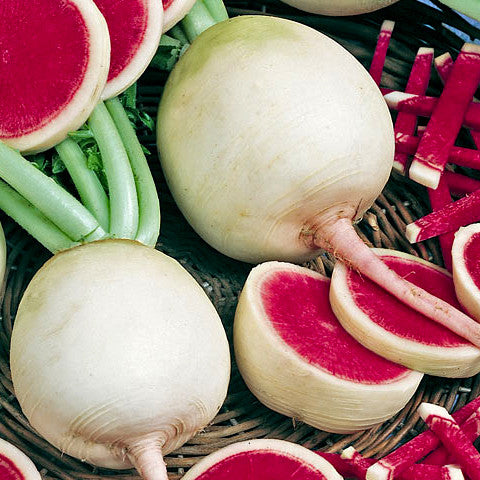 Watermelon Red Radish Seeds (200 seeds)