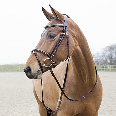 constance flash bridle