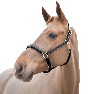 Dark Brown Horze Largo Halter