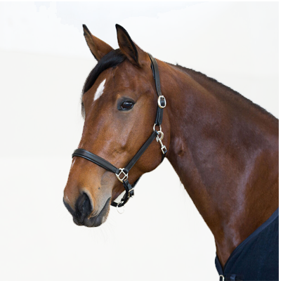 Horze Equestrian Leather Halter