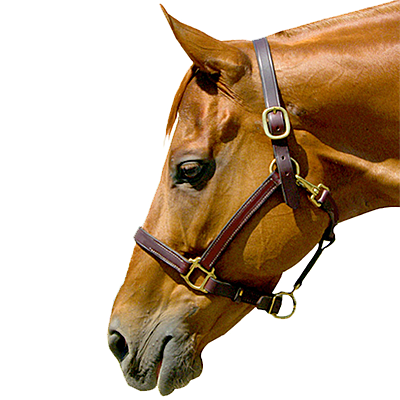 "Intrepid International Deluxe Stable 1"" Leather Halter"