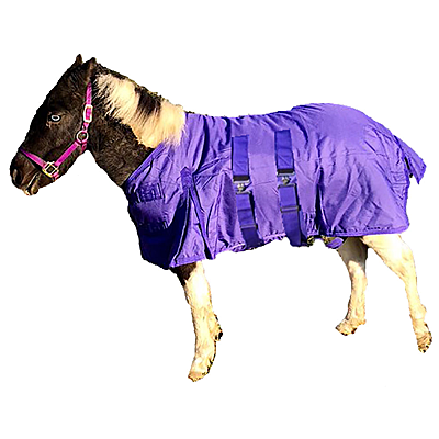 Intrepid International Miniature Horse Heavy Weight Turn Out Blanket