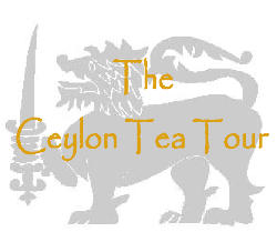 Ceylon Tea Tour