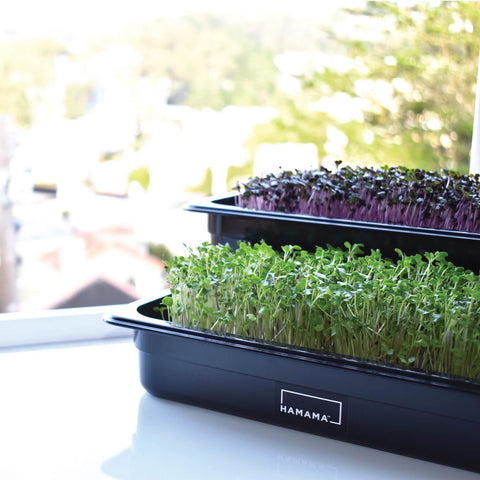 Microgreen Grow Kits