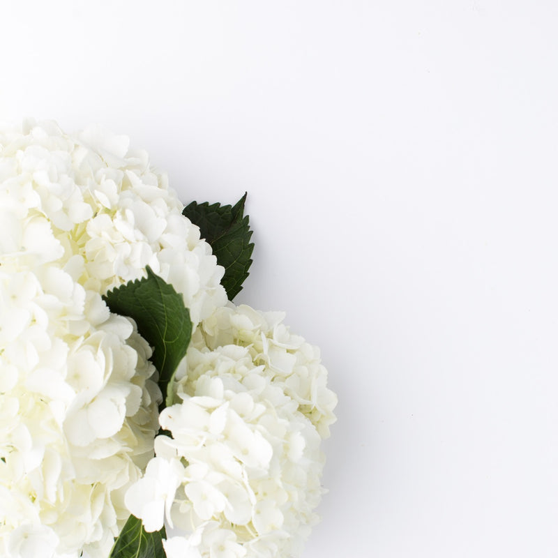 Tips for Bringing Your Hydrangeas Back to Life