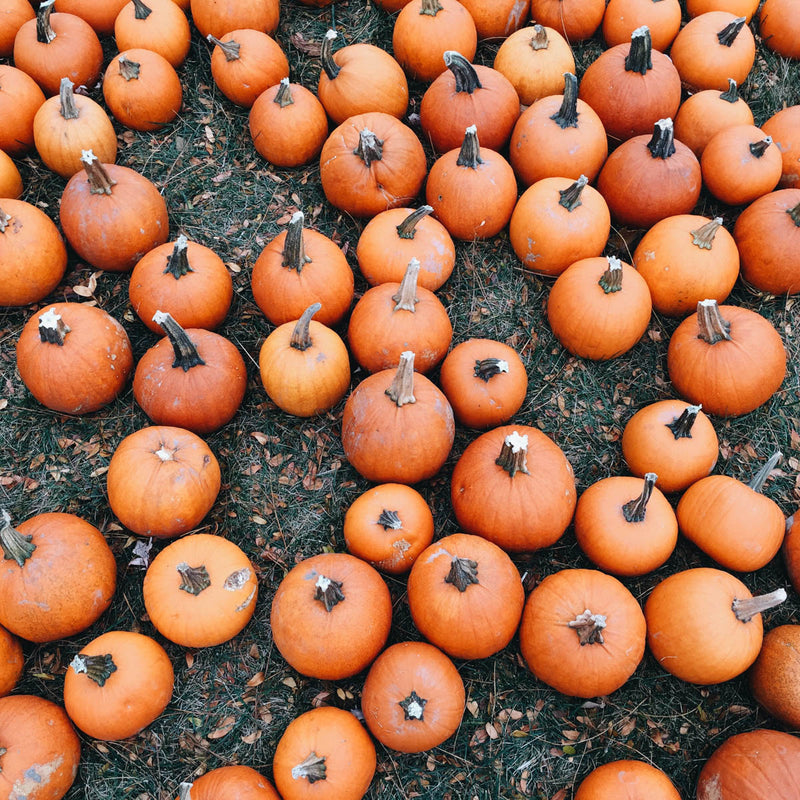 Pumpkins at the pumpkin patch