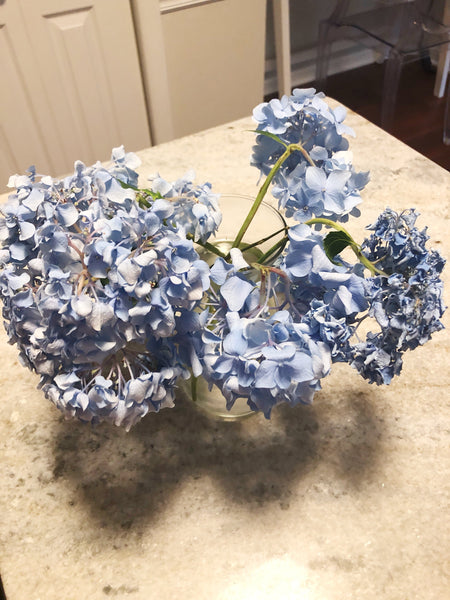 Dying Hydrangea Blooms