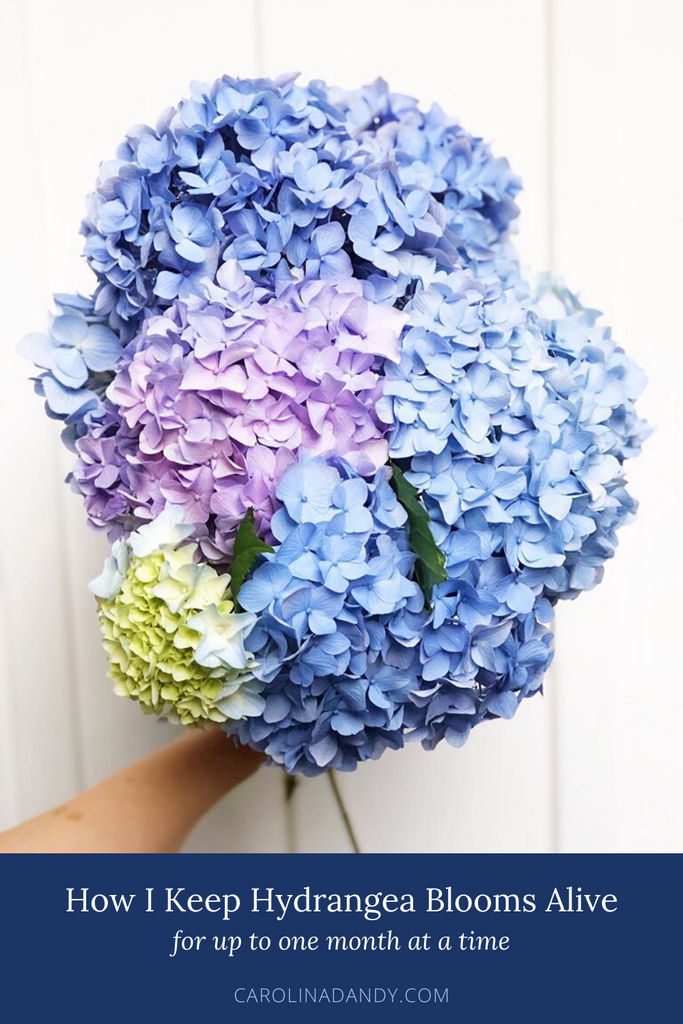 Tips for Keeping Hydrangea Blooms Alive For Up to a Month