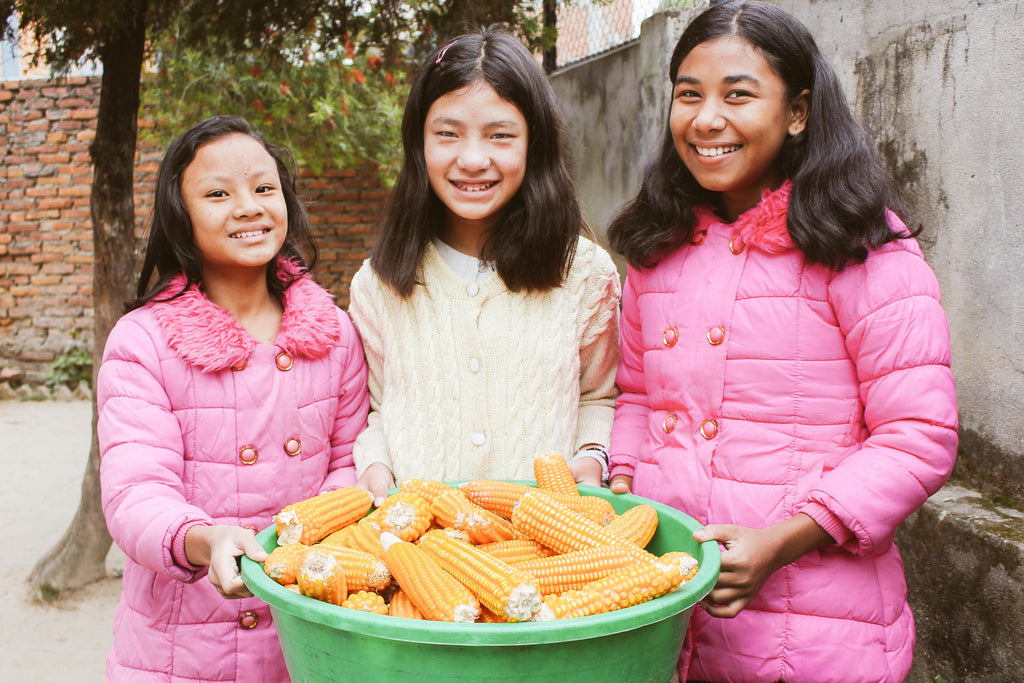 Nearly one ton of corn harvested at Nepal farmland to stock orphan home pantry for one year; essay of an orphan girl's life in her own words