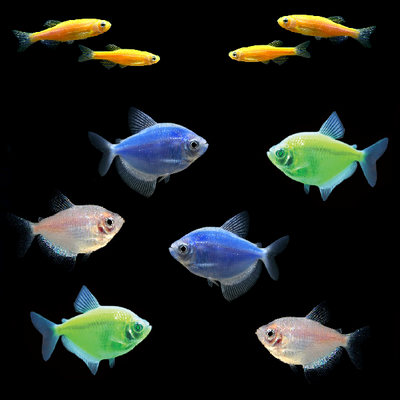 GloFish® Father's Day Collection