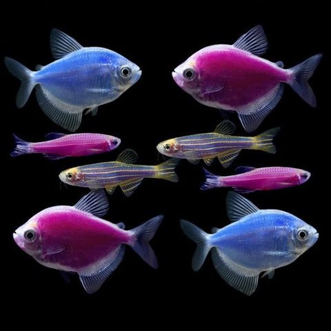 GloFish® Moonlight Collection