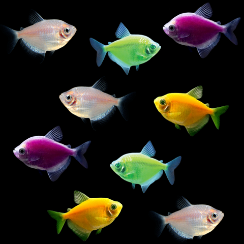 GloFish® Halloween Deluxe Collections