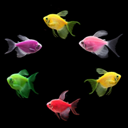 GloFish® Assorted Long-Fin Tetra Collection