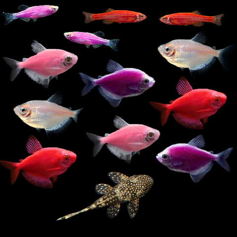 GloFish® Mother's Day Collection