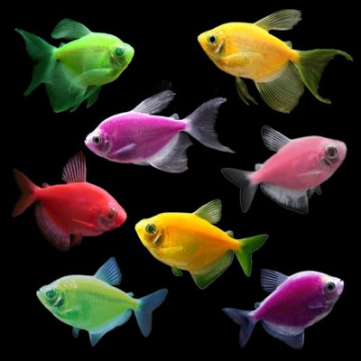 GloFish® Tetra Deluxe Collection