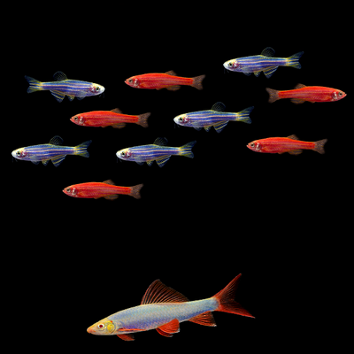 GloFish® Red & Blue Collection