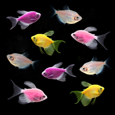 GloFish® Seasonal Collection: Spring Collection
