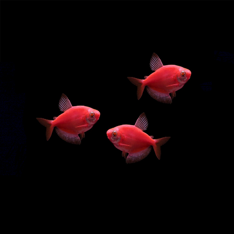 GloFish® Tetra Add-On Collections