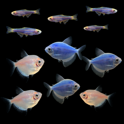 GloFish® Seasonal Collection: Winter Collection