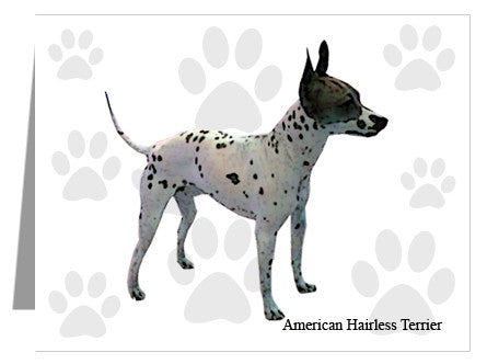 American Hairless Terrier Note Cards